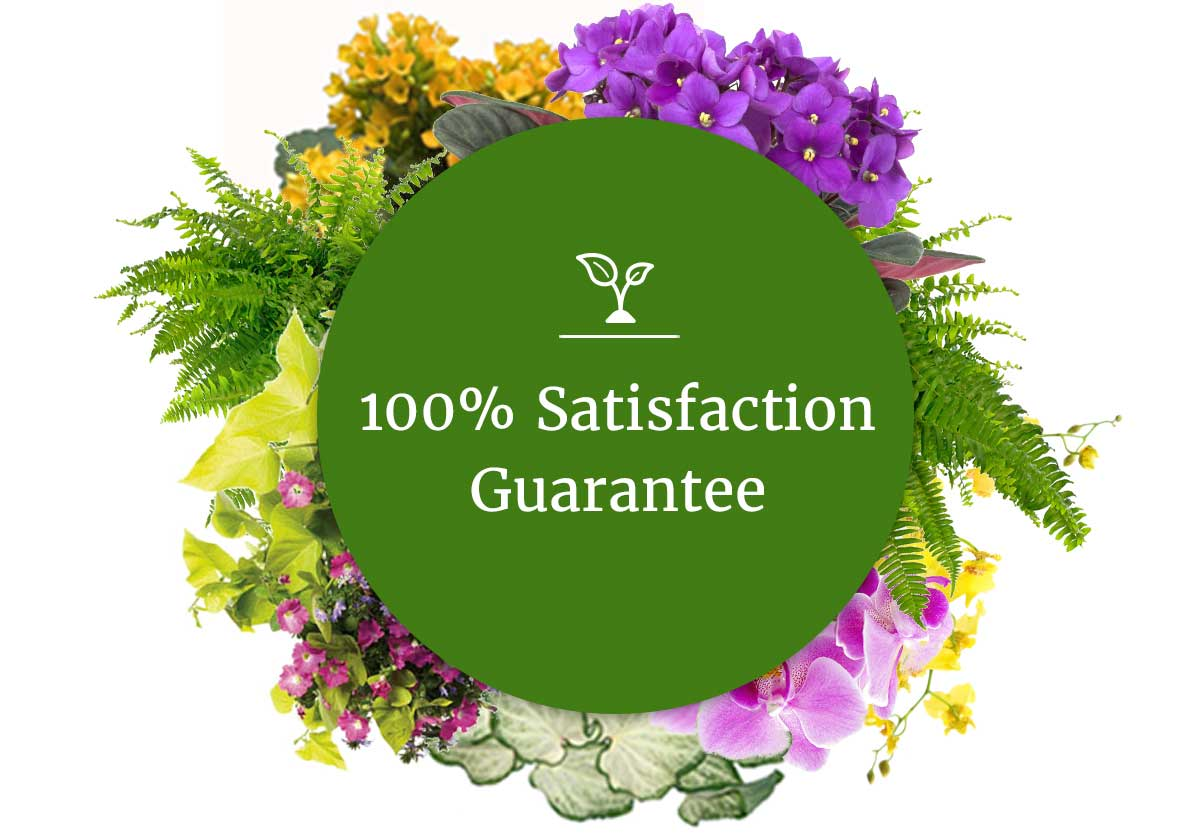 100 Percent Satisfaction Guarantee on green background surrounded by a variety of flowers and plants