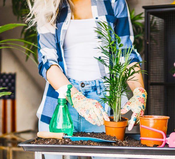 best indoor plants