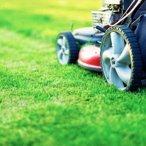 Texas Lawn Care How To Have A Healthy Yard Calloway S Nursery