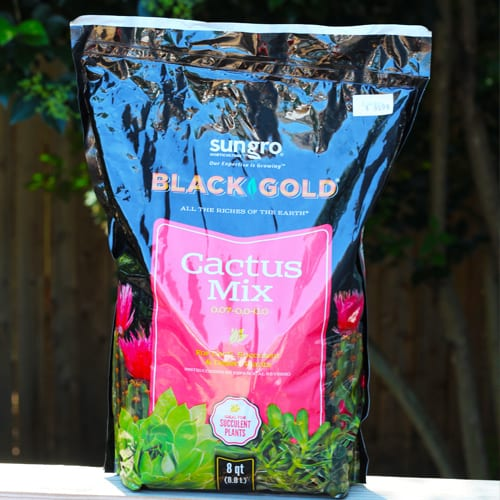 black gold cactus mix